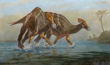 Paleontólogos del INAH y la UNAM identifican una nueva especie de dinosaurio: Tlatolophus galorum