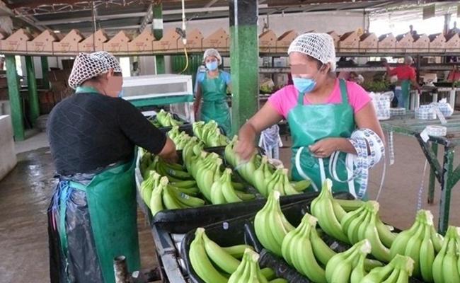 Sancionan a ranchos por trabajo infantil en Chiapas