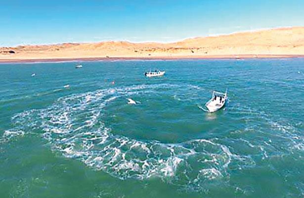 Piden pescadores del Alto Golfo cuidar a la vaquita marina