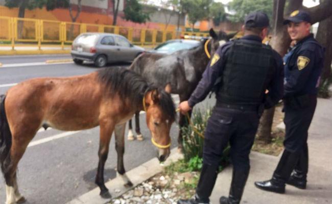 [Video] Rescatan a dos caballos que galopaban entre autos en la CDMX