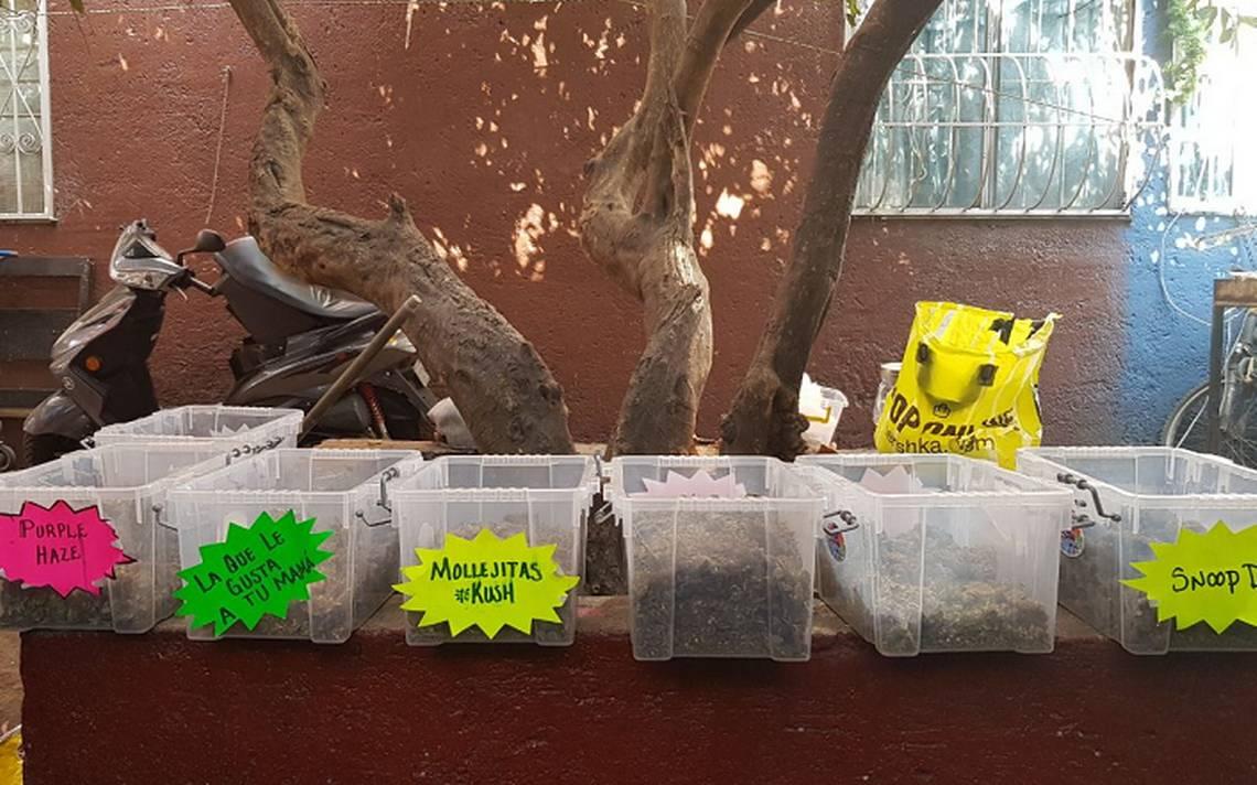 Detienen a 19 vinculados en venta de marihuana 'gourmet' en Tepito