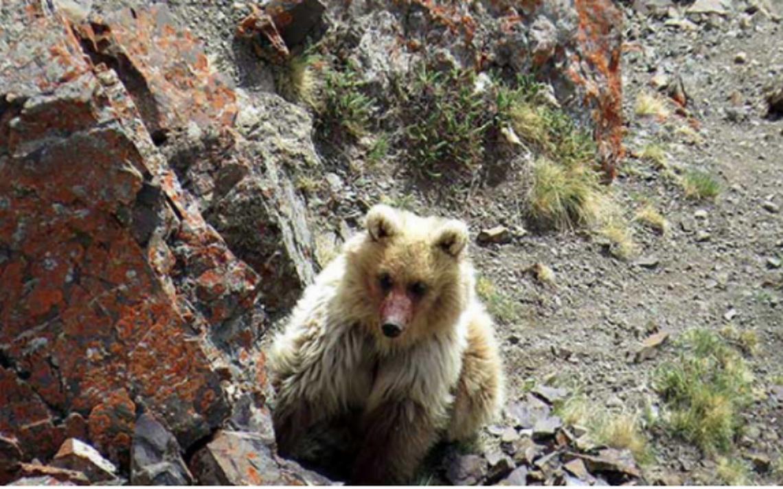Turistas captan a oso que se creía extinto en las montañas de Rusia