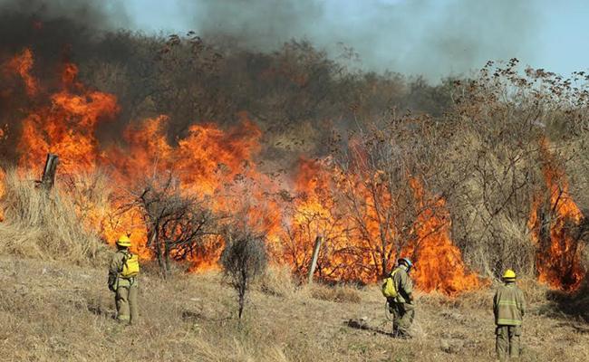Once planteles sin clases por incendio forestal en Zapopan
