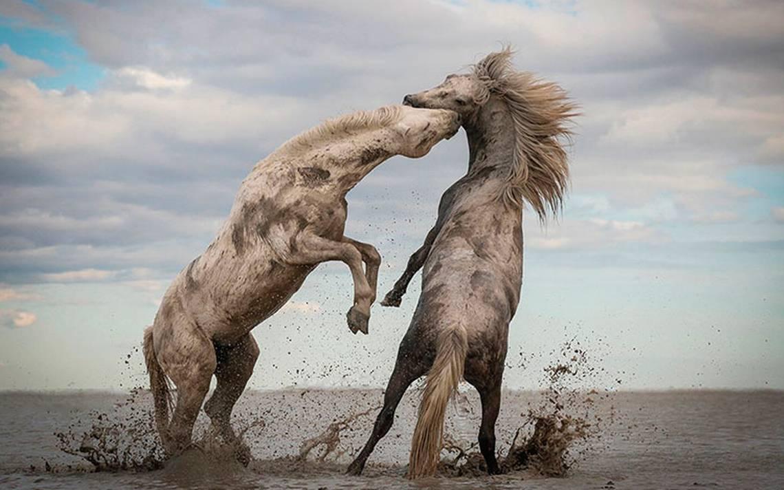 The Nature Conservancy anuncia ganadores del Concurso de Fotografía 2018