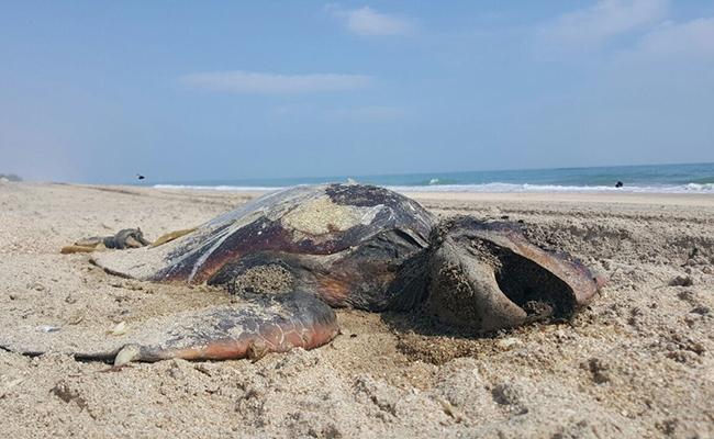 Continúa la mortandad de especies marinas en México