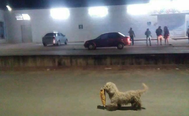 Perrito roba comida y también el corazón de internet