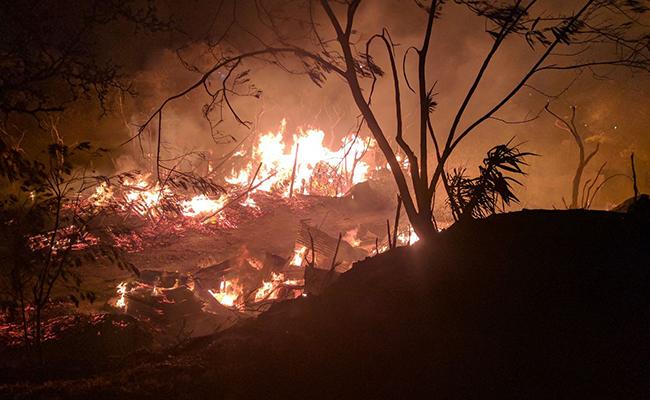Arrasan incendios forestales con flora y fauna en Nayarit