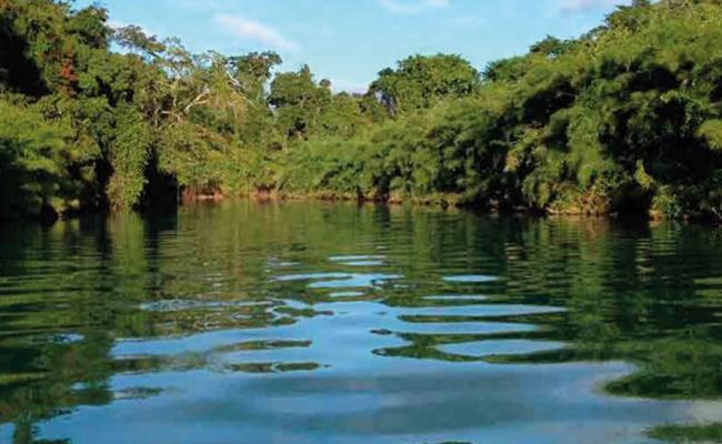 """""""Ecocidio"""" en Chiapas: obispo Felipe Arizmendi"""
