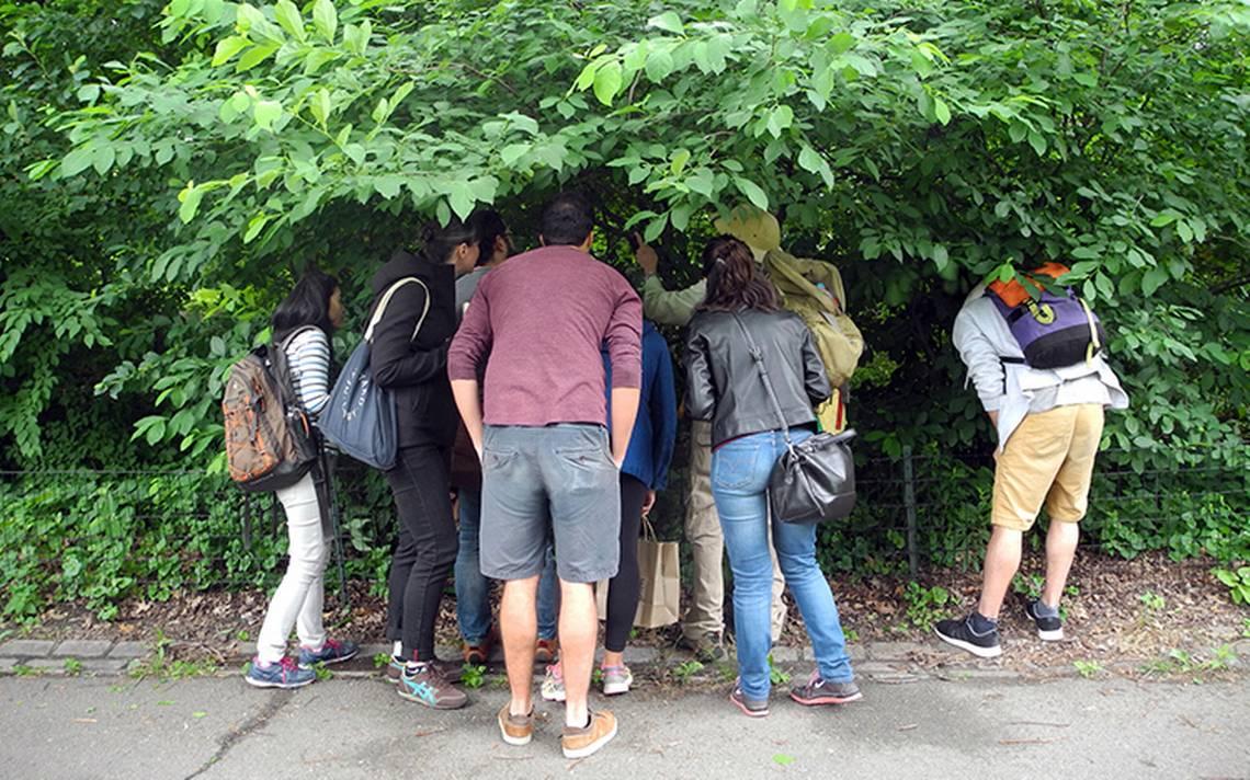 Descubre cómo encontrar tesoros comestibles en los parques de N. York