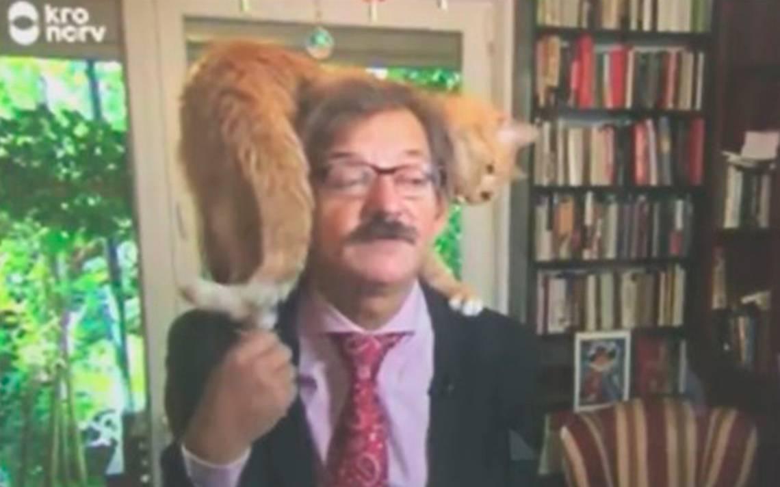 Creo que he visto un lindo gatito: entrevista a politólogo se viraliza por culpa de su mascota