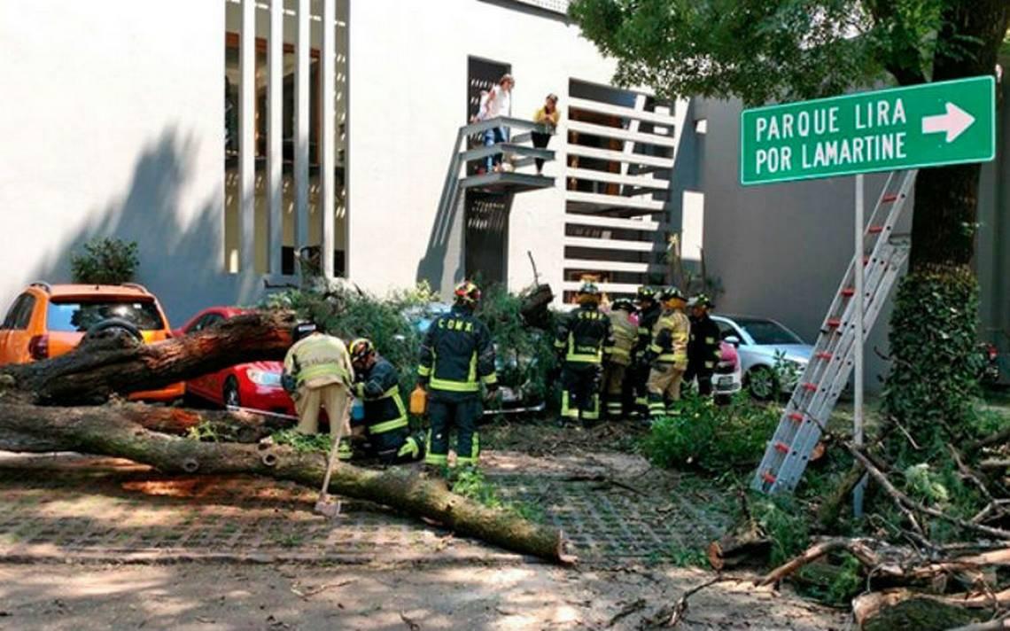 Cae árbol sobre autos en calle de Polanco
