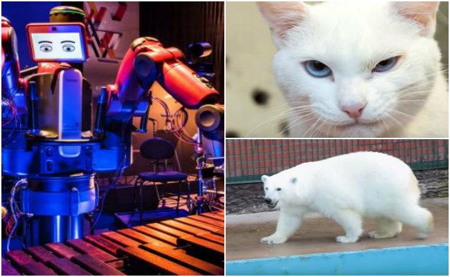 Un gato sordo, una osa polar y un robot, los oráculos de la Confederaciones