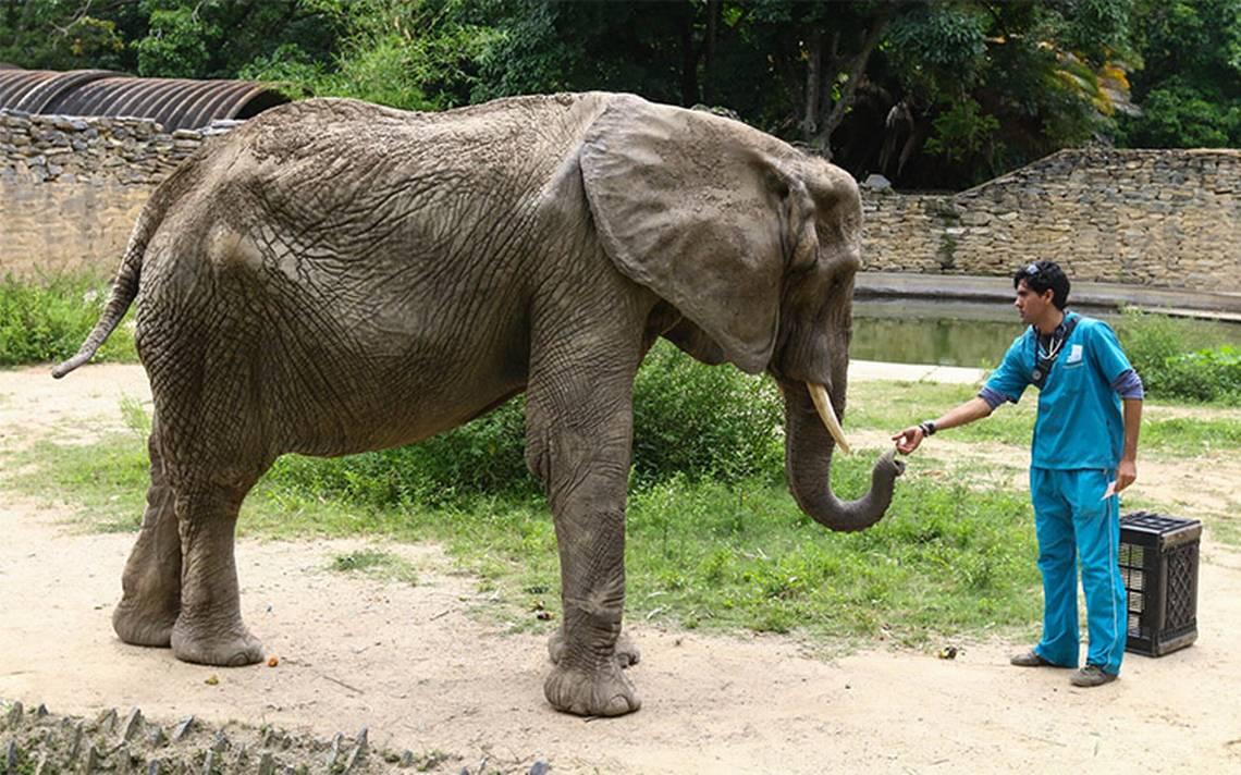 Muere Ruperta, la famosa elefanta del zoológico de Caracas