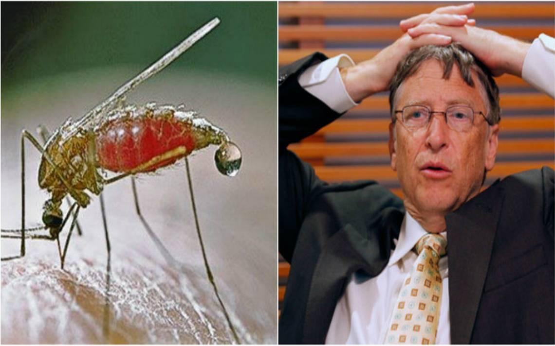 Bill Gates advierte sobre un rebrote de la malaria
