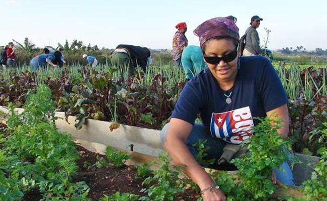 En Cuba el 32 % de los trabajadores autónomos son mujeres