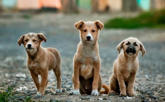 Reos podrían rehabilitarse con perros callejeros ?