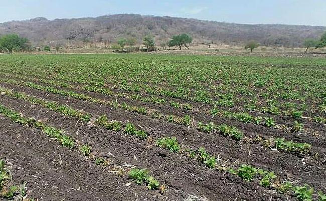 Exigen seguro catastrófico por cultivos siniestrados