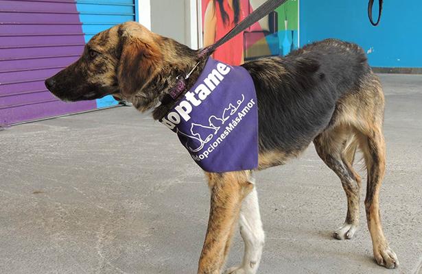 Obligados dueños de perros a levantar heces de la calle