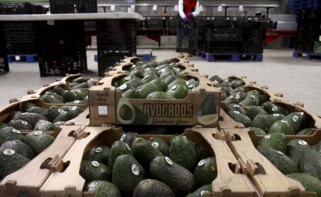Aguacate sube de nuevo, el kilo se vende hasta en 90 pesos en mercados del país