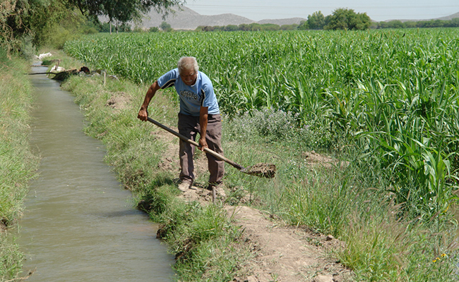Sagarpa le quiere dar migajas al campo lagunero