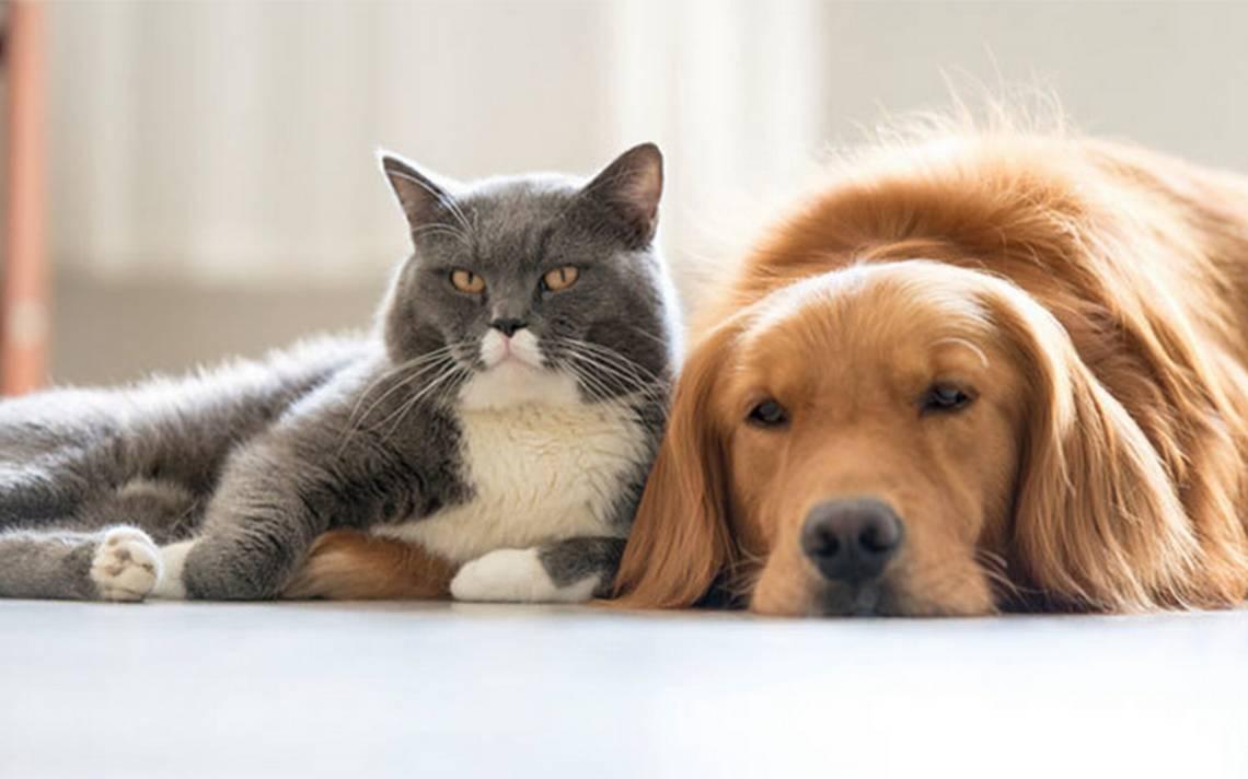 Demencia senil en mascotas es una realidad ¿Cómo detectarla?