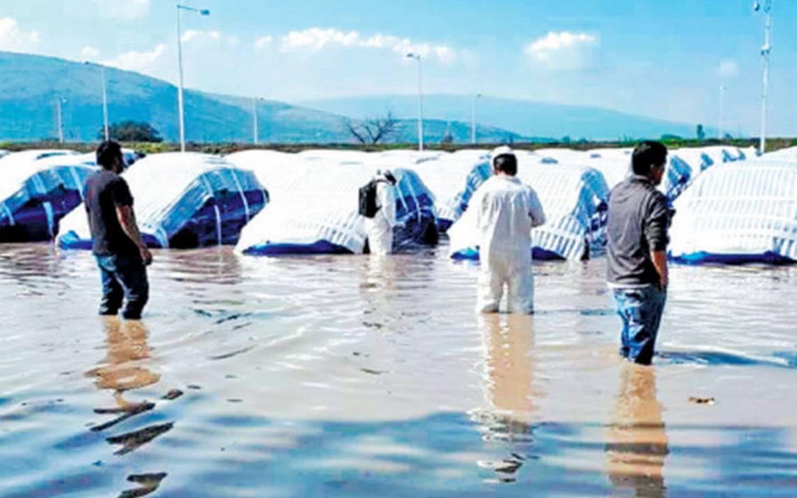 Afecta impacto por paro de Honda en Guanajuato