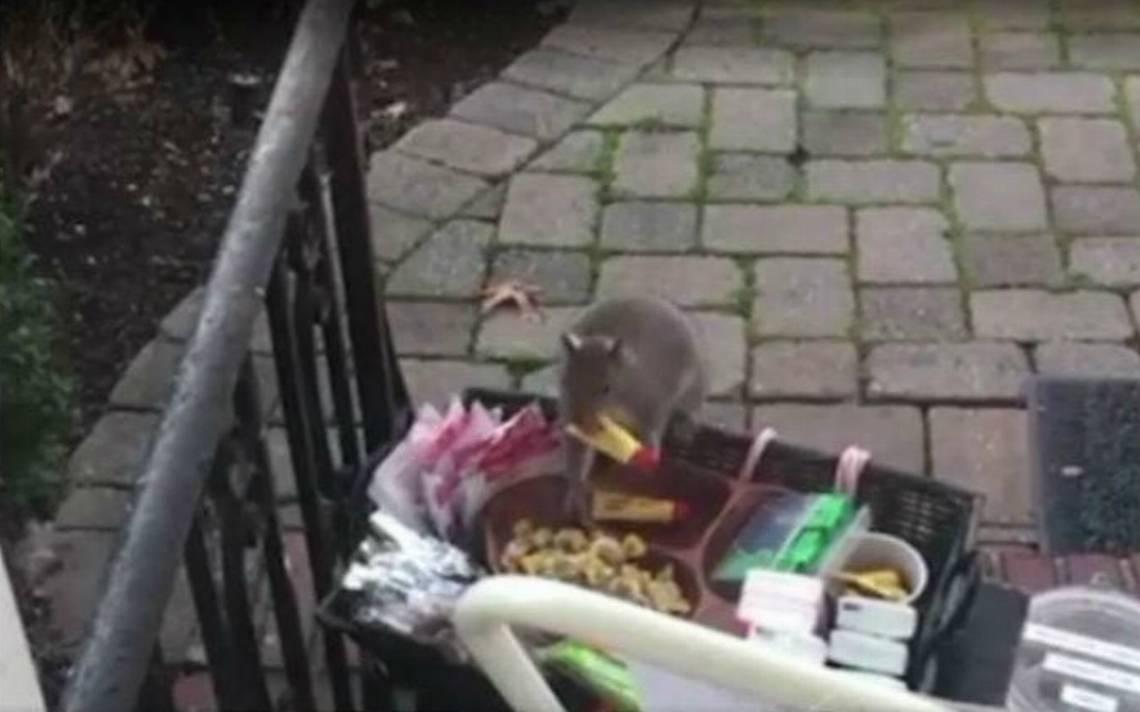 Al descubierto la identidad del Grinch: ardilla roba la 'navidad'