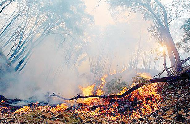 Afectaron incendios más de 150 hectáreas