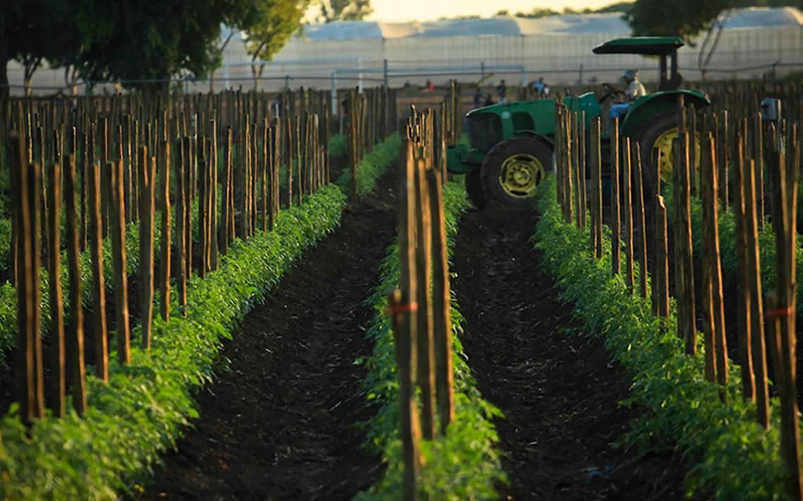 El uso de un polémico herbicida divide a toda Europa