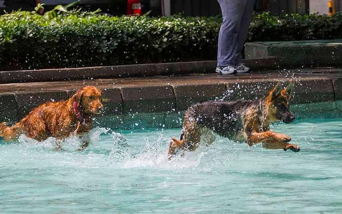 Lo que debes hacer para cuidar a tu mascota del intenso calor