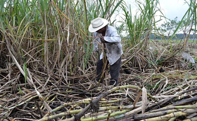 México cancela permisos vigentes de exportación de azúcar a Estados Unidos