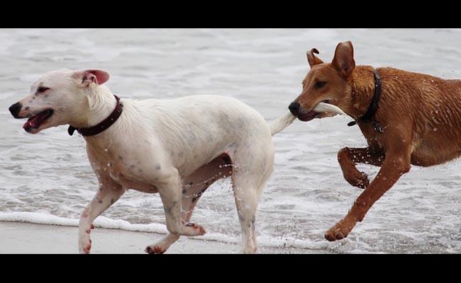 Prohiben cortar la cola a los perros por motivos estéticos