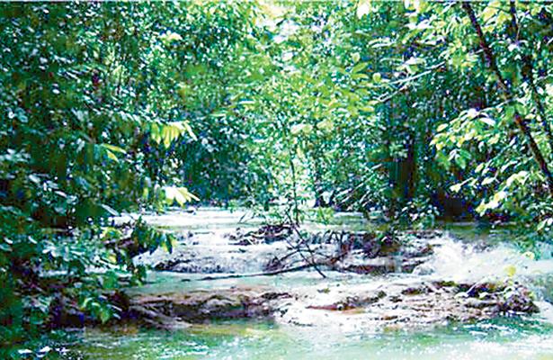 Incrementa Chiapas la superficie de Áreas Naturales Protegidas
