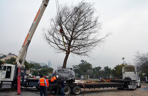 Siembran árbol emblemático en legendaria colonia de San Pedro Garza