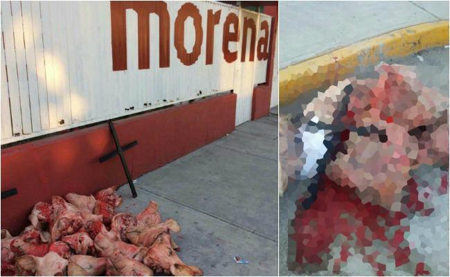 Arrojan cabezas de cerdo frente a dos sedes de Morena en Edomex