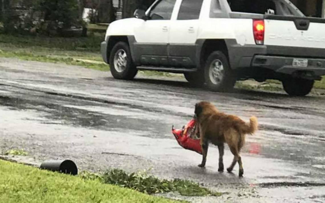 Gracias a redes encuentran a perro que escapó con comida de huracán Harvey