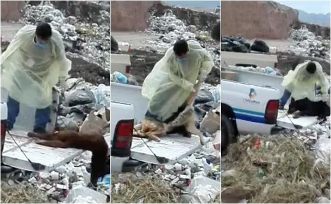 Tiradero de cadáveres animales a relleno causa indignación