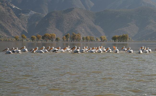 Llegan a Hidalgo aves migratorias del norte del país