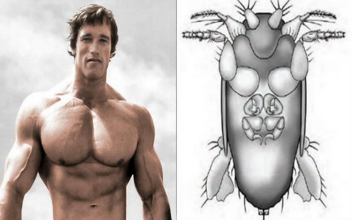 En honor a Arnold Schwarzenegger, nombran a nueva mosca de la Amazonía brasileña