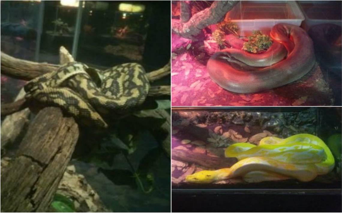 Aseguran 62 reptiles y un anfibio ilegales en Herpetario de Six Flags
