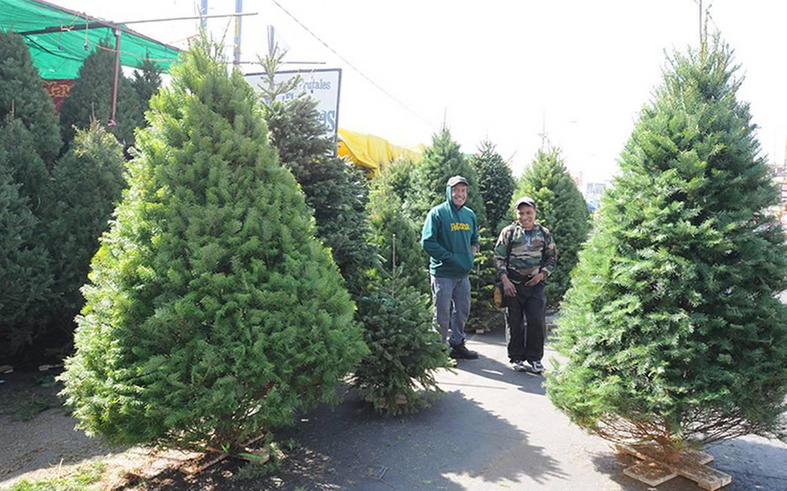 Ofrecen árboles de Navidad económicos