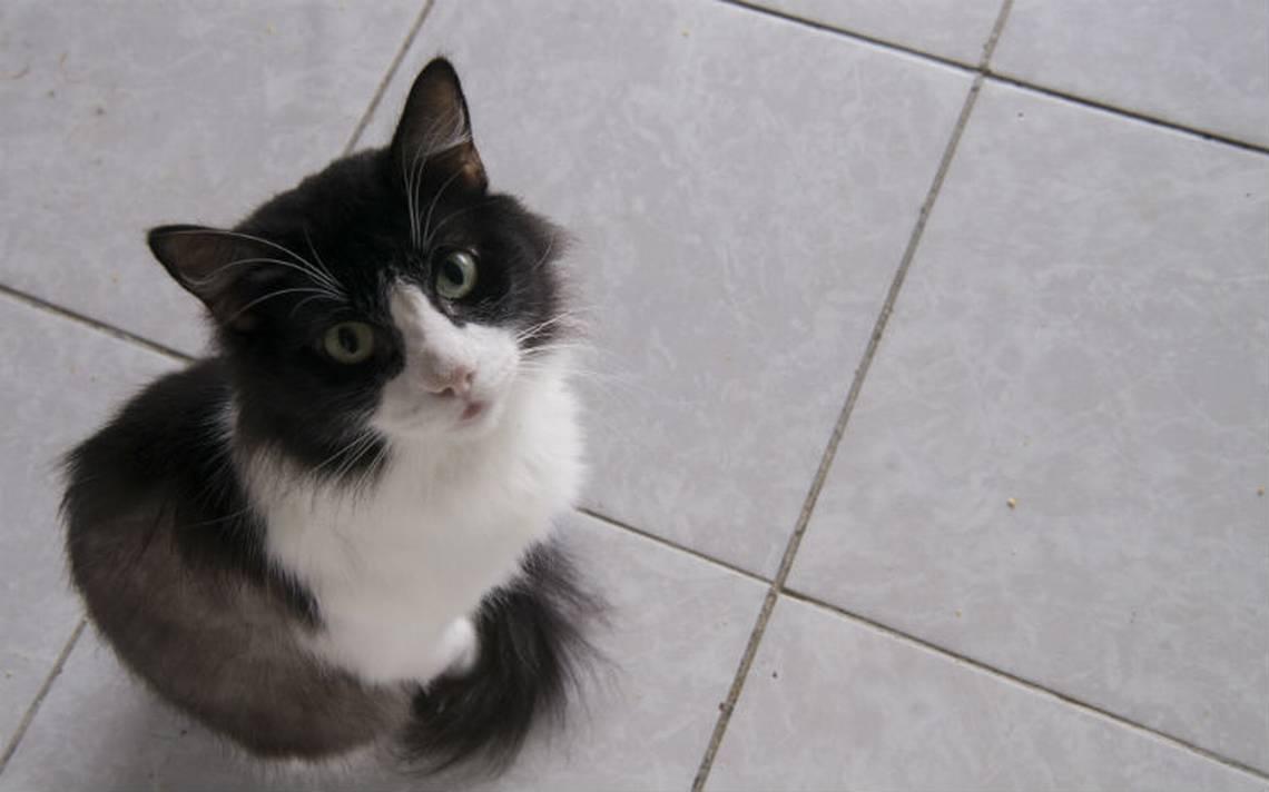 Siete datos curiosos para celebrar el Día Internacional del Gato