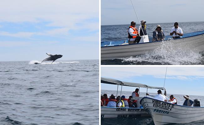 ?Video Encuentran cría albina de ballena gris en costas mexicanas