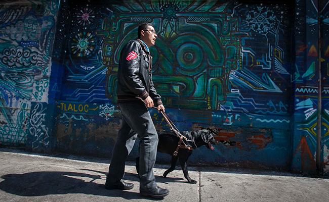 Perros guía: los fieles amigos que llevan amor y luz
