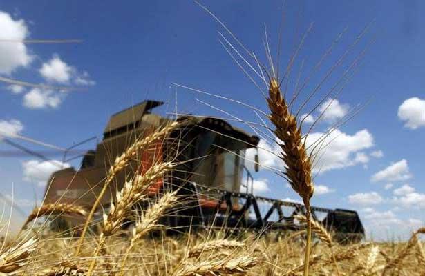 Diversificación permite récord histórico en exportaciones agropecuarias: Sagarpa