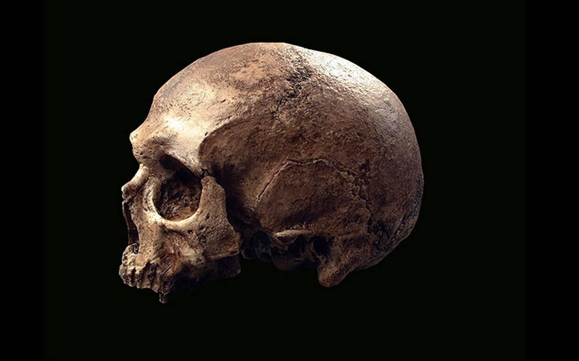 Estudio revela que la humanidad cumple cerca de 350 mil años en la tierra