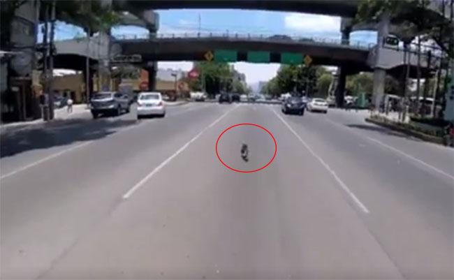 Entre coches, ciclista persigue a perro por dos minutos y logra rescatarlo