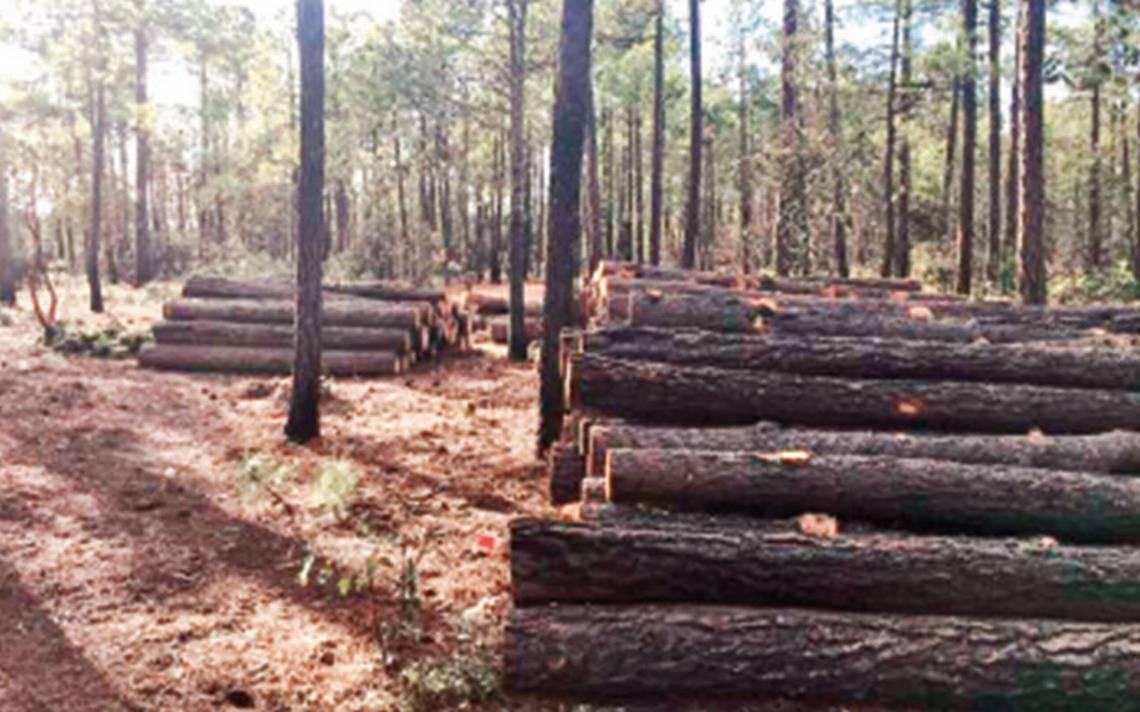 Queman llanos y evitan pesquisas por tala ilegal en Chihuahua