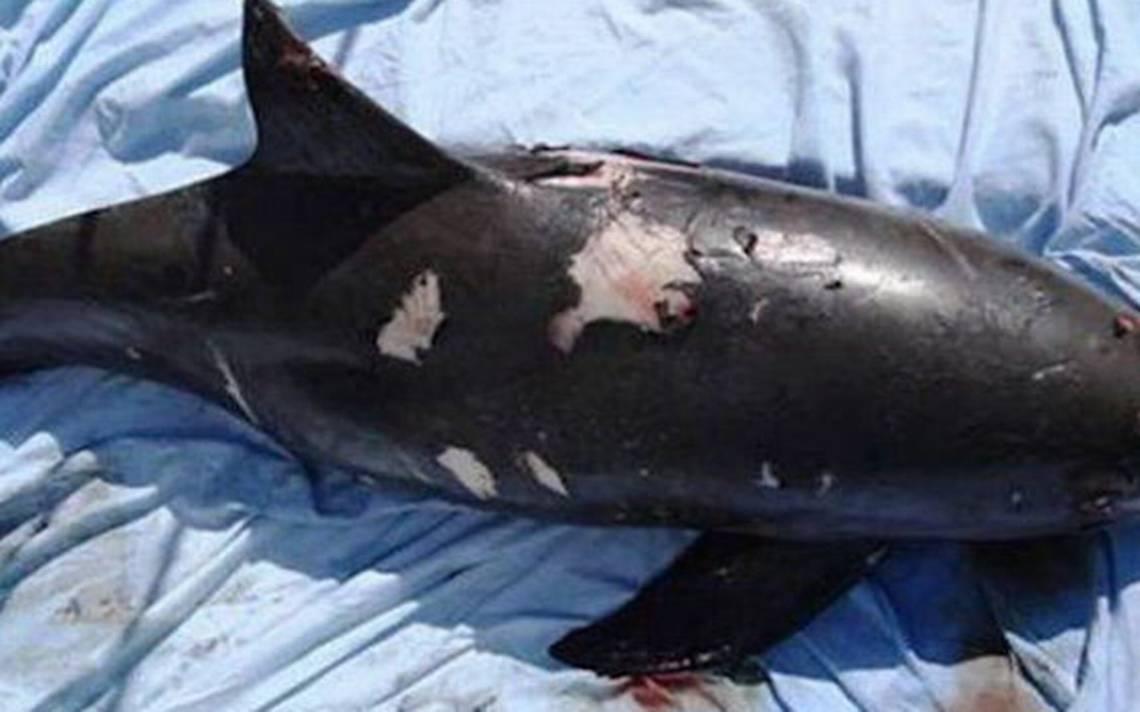 Semarnat busca abatir pesca y tráfico ilegal de totoaba