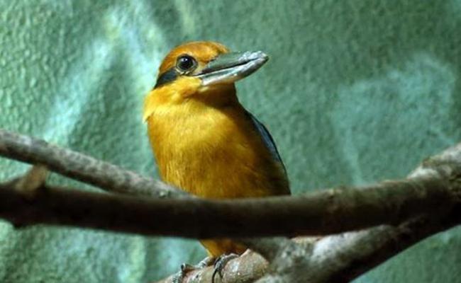 Muere ejemplar de ave en extinción, sólo quedan 146 en el mundo